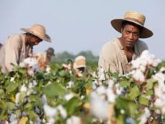 12-Years-A-Slave-cotton
